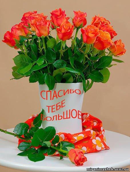miranimashek.ucoz.ru