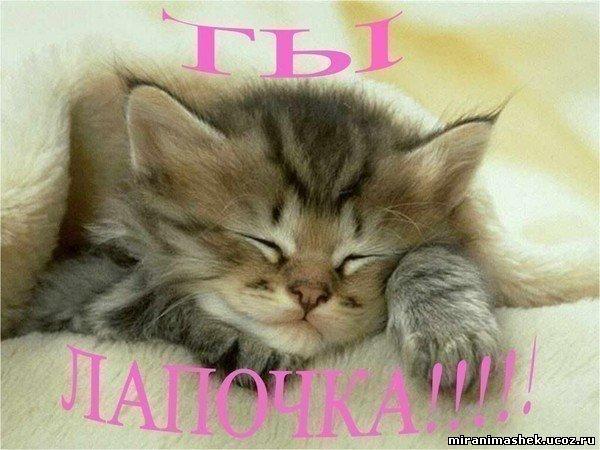http://miranimashek.ucoz.ru/_ph/139/2/167453816.jpg