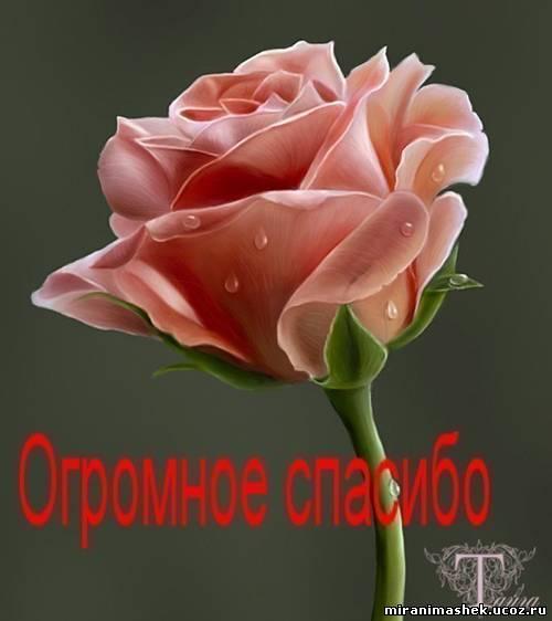 http://miranimashek.ucoz.ru/_ph/140/2/354568362.jpg