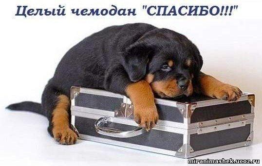 http://miranimashek.ucoz.ru/_ph/140/2/38220464.jpg