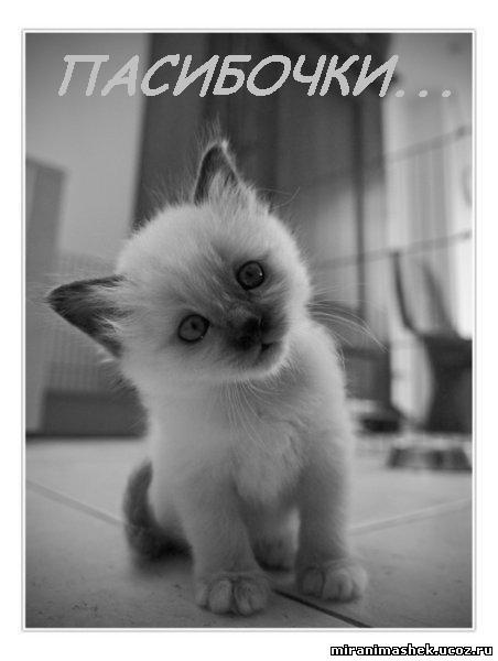 Спасибо картинки коты