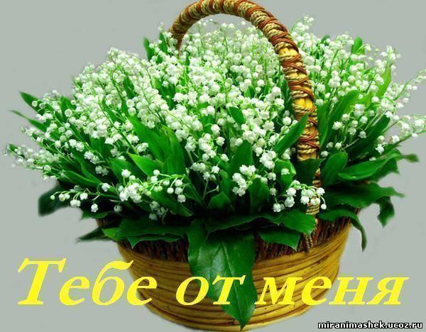 http://miranimashek.ucoz.ru/_ph/142/2/558515269.jpg