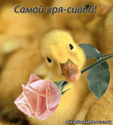 http://miranimashek.ucoz.ru/_ph/142/2/639855447.jpg