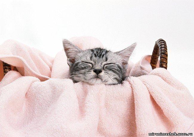Анимашки Кошки, котята, картинки Кошки, котята