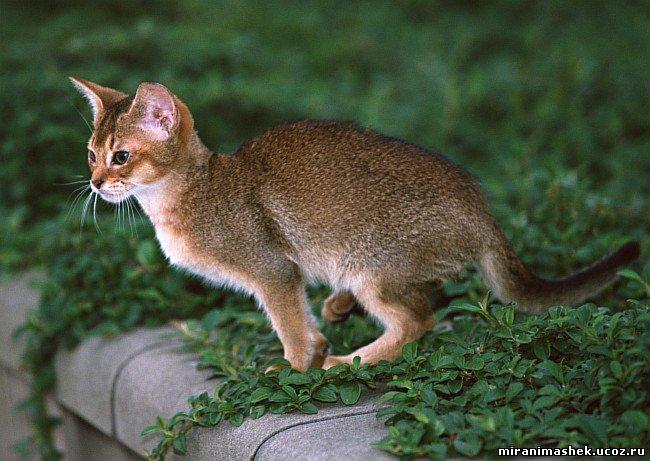 Анимация Кошки, котята, анимационные картинки Кошки, котята