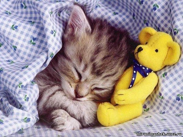 Фото Кошки, котята, анимация и картинки Кошки, котята