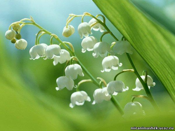 http://miranimashek.ucoz.ru/_ph/206/2/161391240.jpg