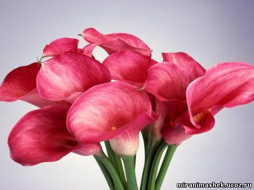 http://miranimashek.ucoz.ru/_ph/206/2/234654505.jpg