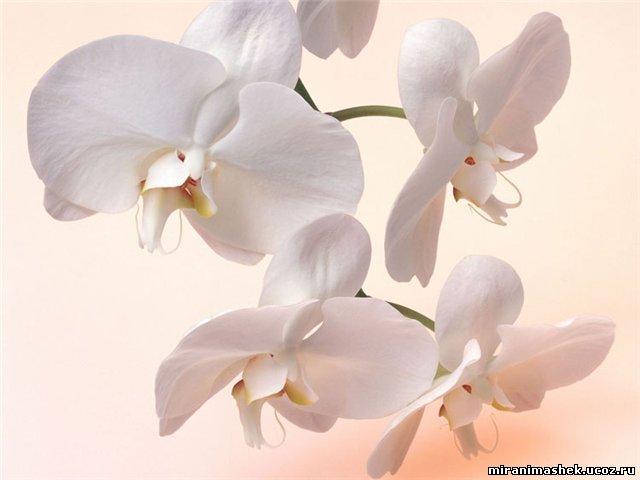 http://miranimashek.ucoz.ru/_ph/206/2/286491935.jpg