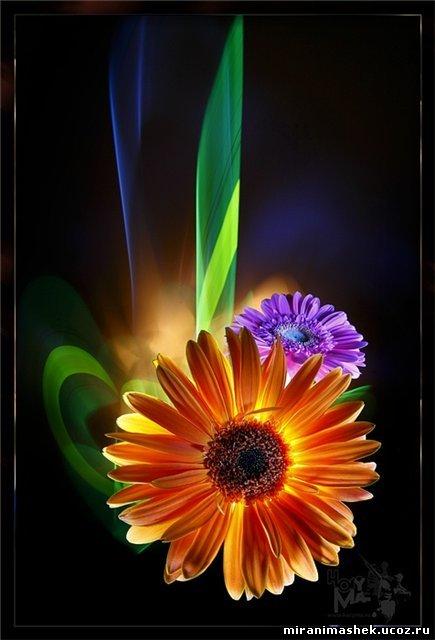 Анимация Цветы, анимационные картинки Цветы
