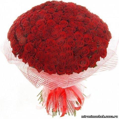 http://miranimashek.ucoz.ru/_ph/206/2/446845490.jpg