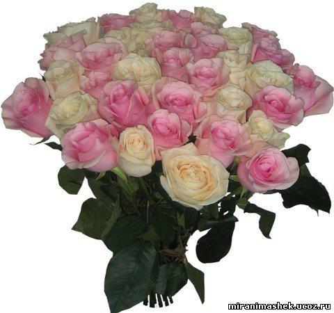 http://miranimashek.ucoz.ru/_ph/206/2/500527423.jpg