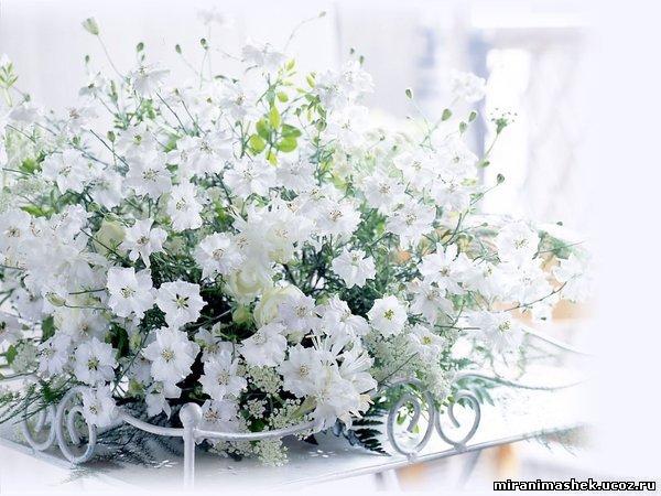 http://miranimashek.ucoz.ru/_ph/206/2/51024835.jpg