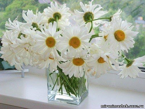Фото Цветы, анимация и картинки Цветы