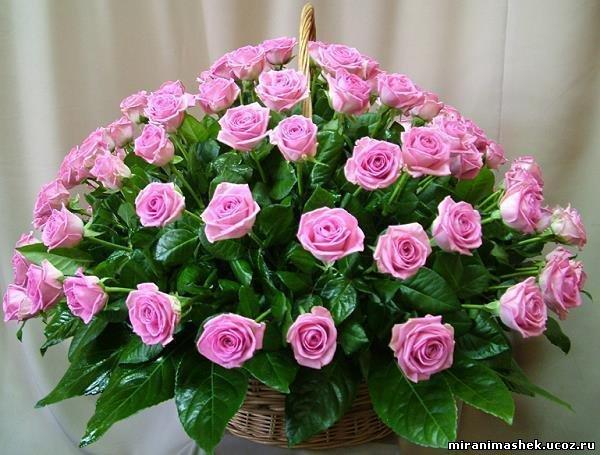 http://miranimashek.ucoz.ru/_ph/206/2/650409308.jpg
