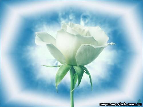 http://miranimashek.ucoz.ru/_ph/206/2/687503475.jpg