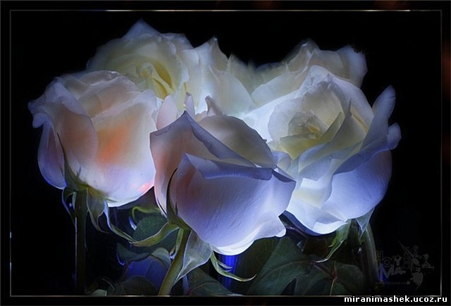 http://miranimashek.ucoz.ru/_ph/206/2/981295286.jpg
