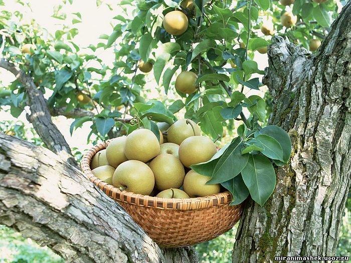 Анимация Ягоды, фрукты, картинки Ягоды, фрукты бесплатно