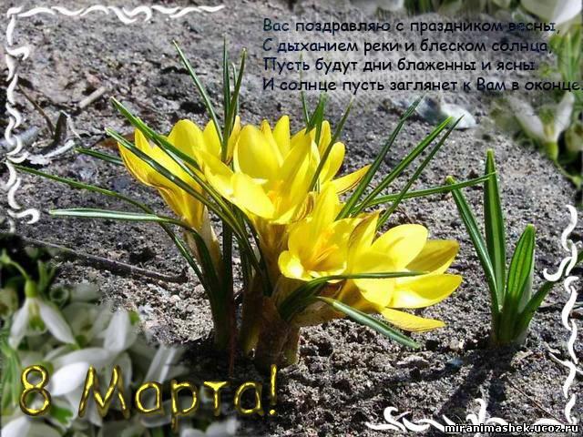 Поздравление с праздником весны короткое