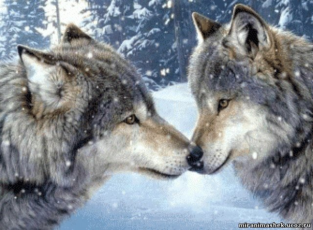 Анимация Животные и любовь, анимационные картинки Животные и любовь