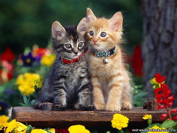 http://miranimashek.ucoz.ru/_ph/251/2/659844126.jpg
