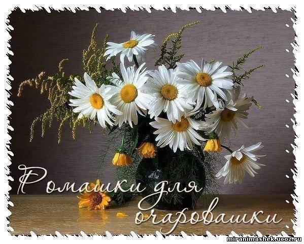 http://miranimashek.ucoz.ru/_ph/375/2/554443227.jpg