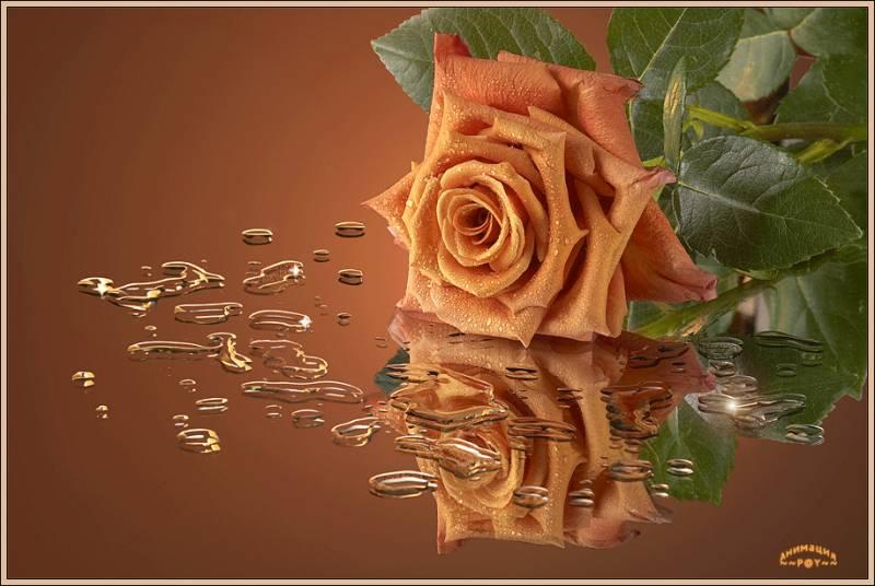 http://miranimashek.ucoz.ru/_ph/87/2/936315961.jpg